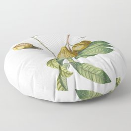 Plantae Selectae No 42-guaiaba or Guava by Georg Dionysius Ehret Floor Pillow