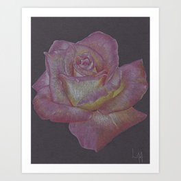 Pink and Yellow Rose Art Print