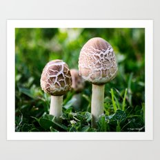 A Couple of Shrooms Art Print
