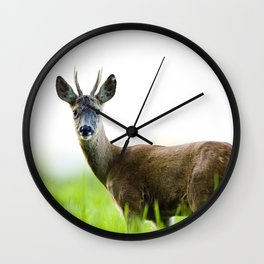 Roe Deer Buck 2 Wall Clock