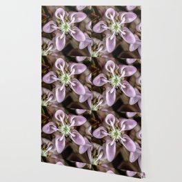Milkweed flower close up Wallpaper