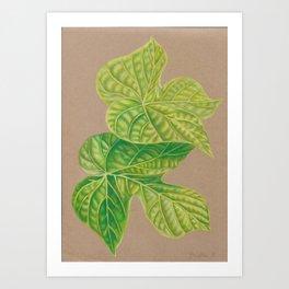 Leaf Drawing Art Print