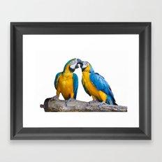 isolated ara ararauna parrot Framed Art Print