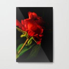 Solitary Rose Metal Print