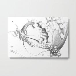 Dragonfly Mating Metal Print