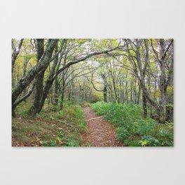Enchanted Path Canvas Print