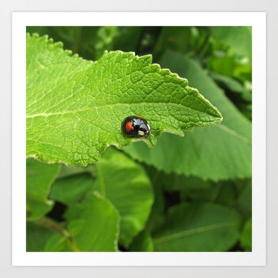 black ladybug I Art Print