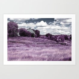 Pink Fields HDR and Infrared Art Print