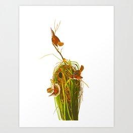 Marsh Wren Art Print