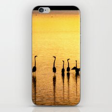 Silhouette of Pink Flamingos iPhone & iPod Skin