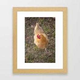 Chicken! Framed Art Print