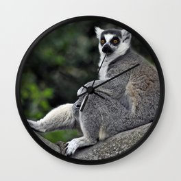 Ring-tailed Lemur Wall Clock