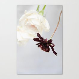white roses and chocolate cosmos Canvas Print