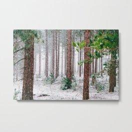Vivid Snow Forest (Color) Metal Print