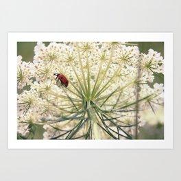 Lacybug Art Print