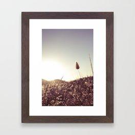 New Zealand Toitoi  Framed Art Print
