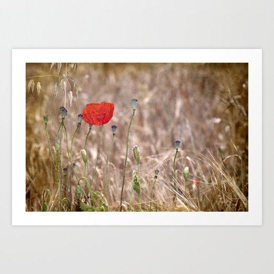 Happy poppy....... Art Print