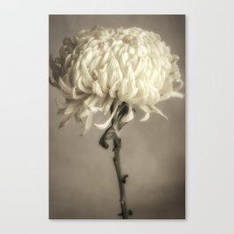 Chrysanthemum I Canvas Print