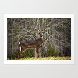 White Tailed Deer Eight Point Buck Art Print