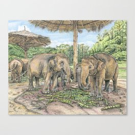Rescued in Thailand Canvas Print