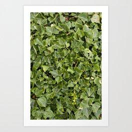 Green Leafs Art Print