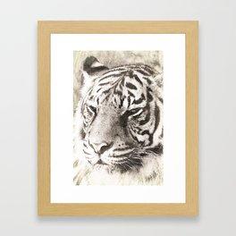 A Sketchy Tiger Framed Art Print