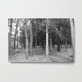 BLACK AND WHITE// FOREST Metal Print