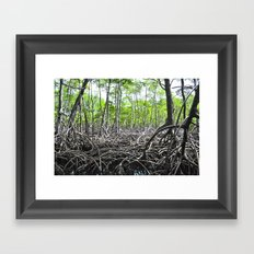 Rain Forest Framed Art Print