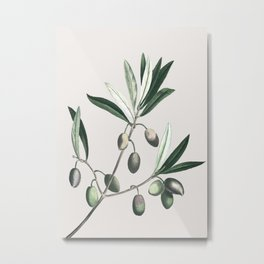 Olive Tree Branch Metal Print