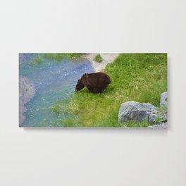 Glacier fed - bear approved Metal Print