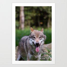 Canis Lupus Lupus III Art Print