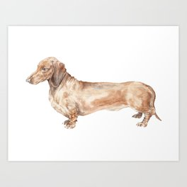A long dog: Dachshund doxie puppy dog watercolor pet portrait Art Print