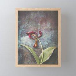 Faded Tulip Framed Mini Art Print