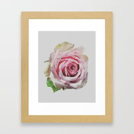 Antique Blush Rose Framed Art Print