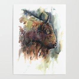 Bison. Poster