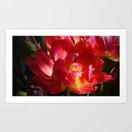 Red Parrot Tulip close up II Art Print