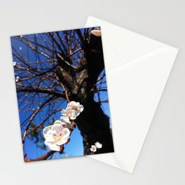 Apricot Tree in Bloom Stationery Cards