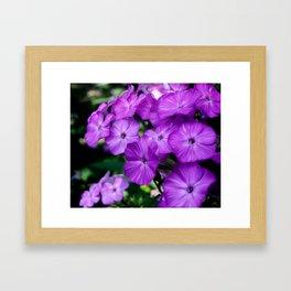 Floral Beauty #4 Framed Art Print