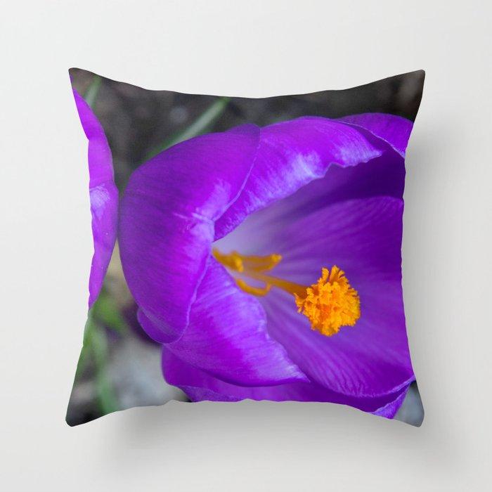 Deep purple and orange crocuses Throw Pillow