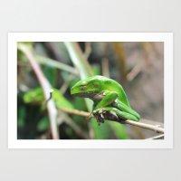 Waxy Monkey Frog Art Print