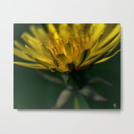 Aphid on a Dandelion Metal Print