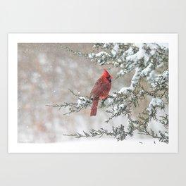 Snow Scene Cardinal Art Print