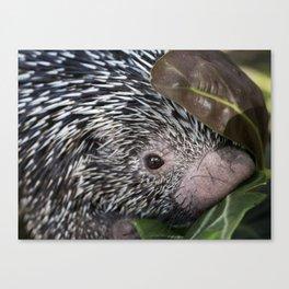Tree Porcupine Canvas Print