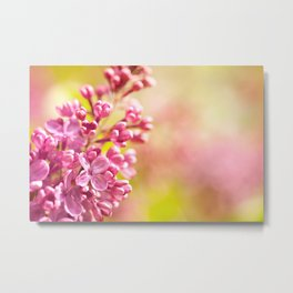 Lilac flowerets bloom bright pink Metal Print
