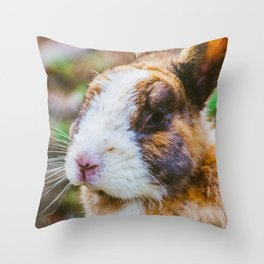 Rabbit in a natural park on the French Riviera Throw Pillow