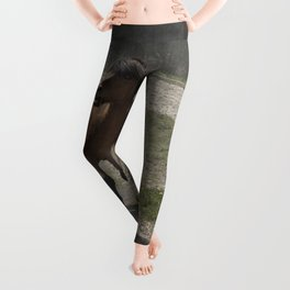 Are you hungry as well? Leggings