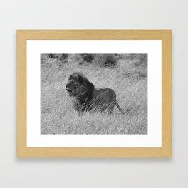 Lion in Maasai Mara Framed Art Print