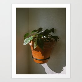 Philodendron Micans in morning sunlight Art Print