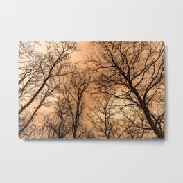 Naked trees and cloudy sunset sky Metal Print