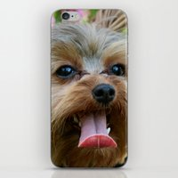 yorkie iPhone & iPod Skins featuring Happy Yorkie by IowaShots